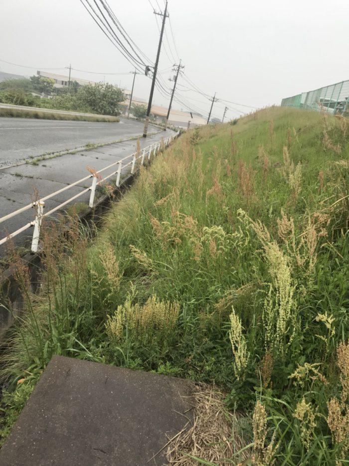福山市草刈り